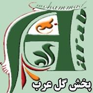 پخش گل محمد عرب در مشهد