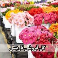گل پونک در مشهد