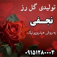 تولیدی گل رز نجفی در مشهد