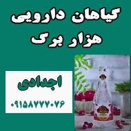 گیاهان دارویی هزار برگ در مشهد